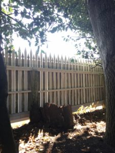 A large tree stump sits next to a white picket fence